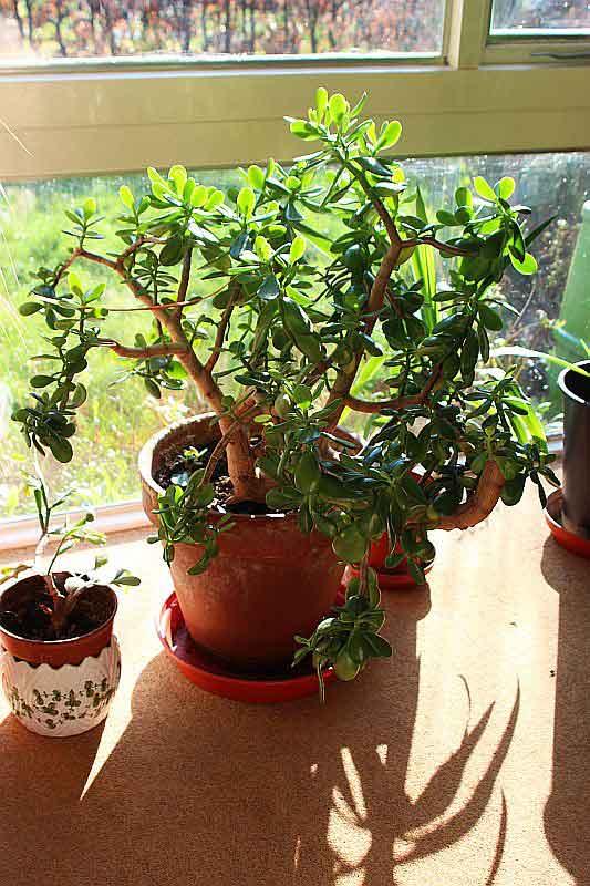 Place Pots on Windowsill