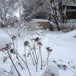 Garden-Wonderland