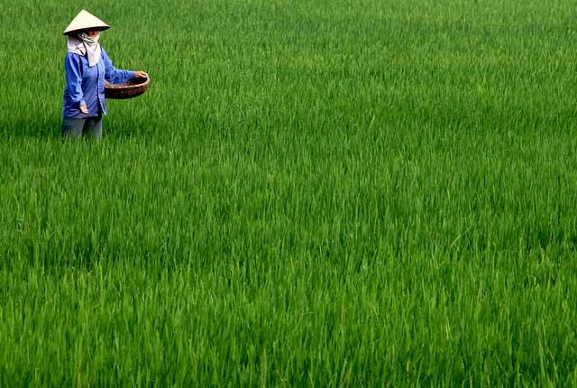 fertiliser-and-compost