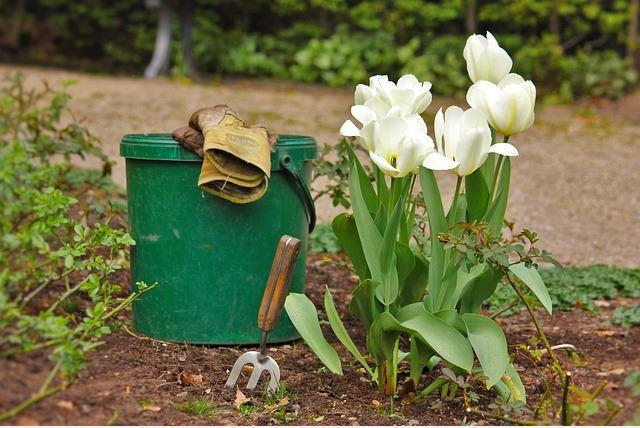 fertiliser for garden