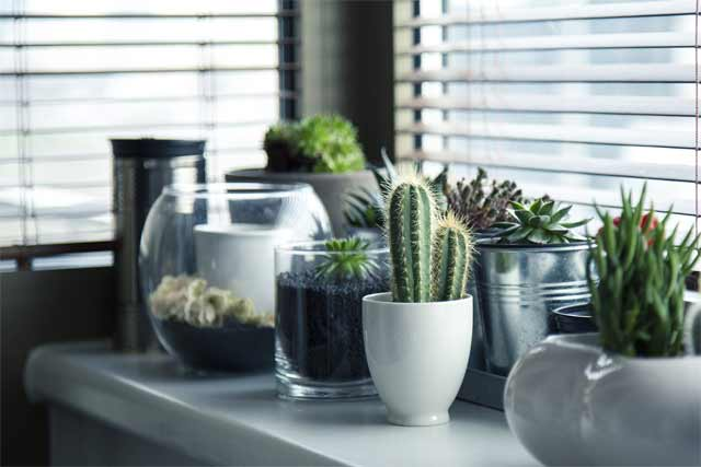 Make your Home an Eco-Friendly Paradise