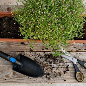 How to Create a Lush Balcony Garden